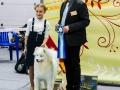 Лучший Юный Хэндлер, эксперт D.Paunovic (Сербия)