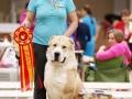 2- Лучшая собака - среднеазиатская овчарка