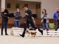 3- Лучшая собака - кавалер кинг чарльз спаниель