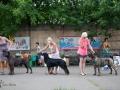 Выбор Лучшей собаки 2 группы