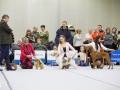 Выбор Лучшей собаки выставки, эксперт Абракимов Ш.М.