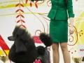 """BIS-I   Победитель выставки клуба """"Екселент""""      05 февраля 2017 г"""